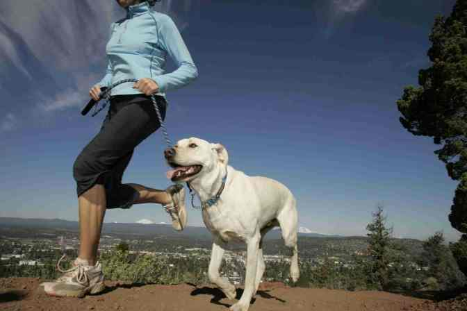 Want to Get Fit? Get a Pet