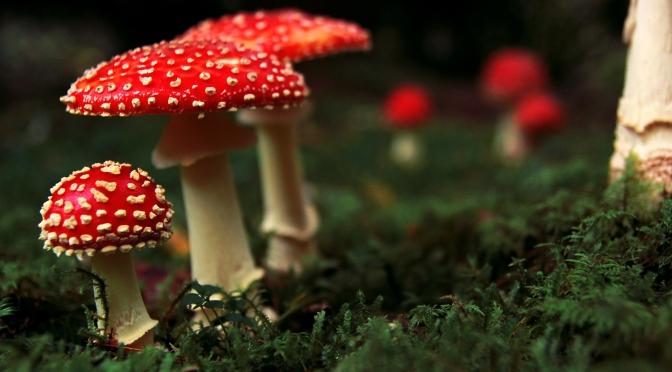 Mushrooms – a good source of vitamin D