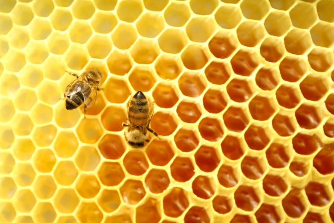Honey – Nectar of Immortality