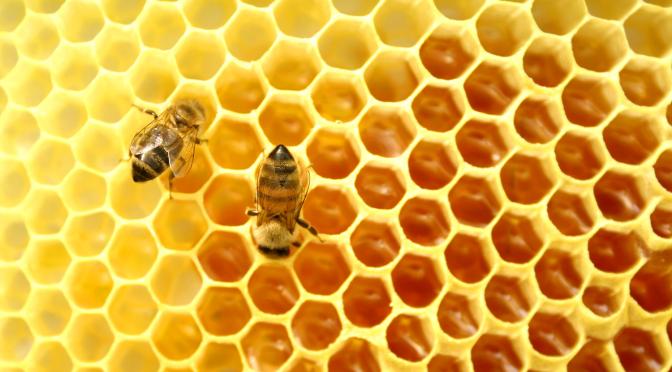 Honey – Nectar of Immortality