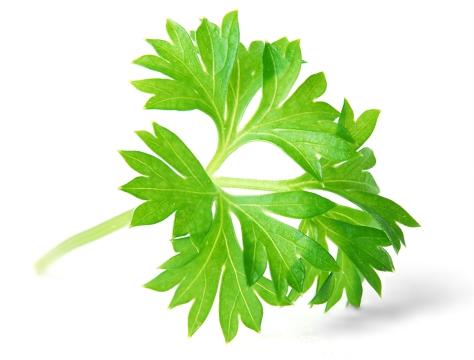 burnblognet_parsley-herb-gardening-gardens.jpg