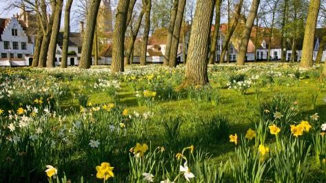 Garden-Flower-Tree-Bruges-