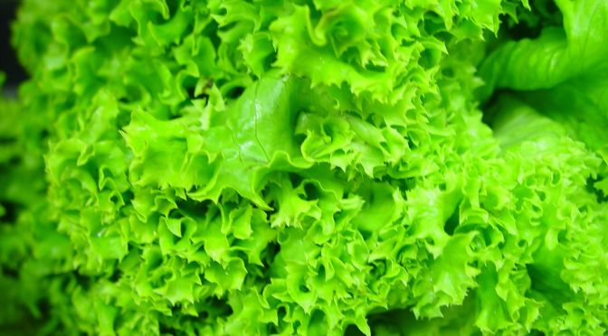 The unique properties of lettuce